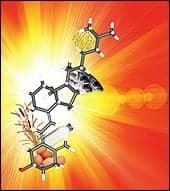 Spotlight On Vitamin D Testing