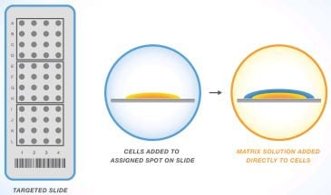 Mass Spectrometry's Potential for Personalized Medicine