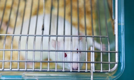 Zika Virus Fatal to Fetal Mice