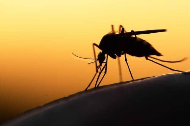 Monoclonal Antibodies Target Yellow Fever