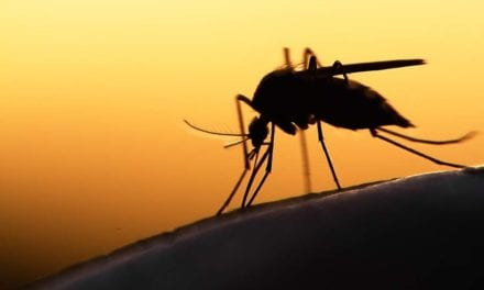 Simple Blood Tests May Help Improve Malaria Diagnosis in Clinical Studies