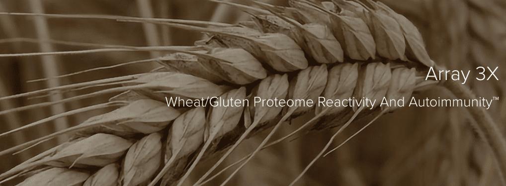 Cyrex Laboratories Launches Wheat/Gluten Reactivity Test