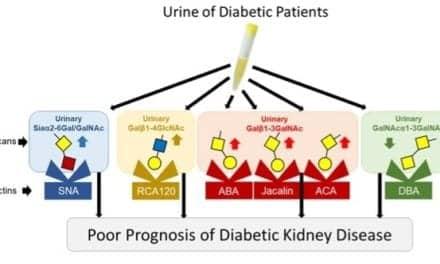 Diabetic Kidney Disease: New Biomarkers Improve Prediction of Renal Prognosis