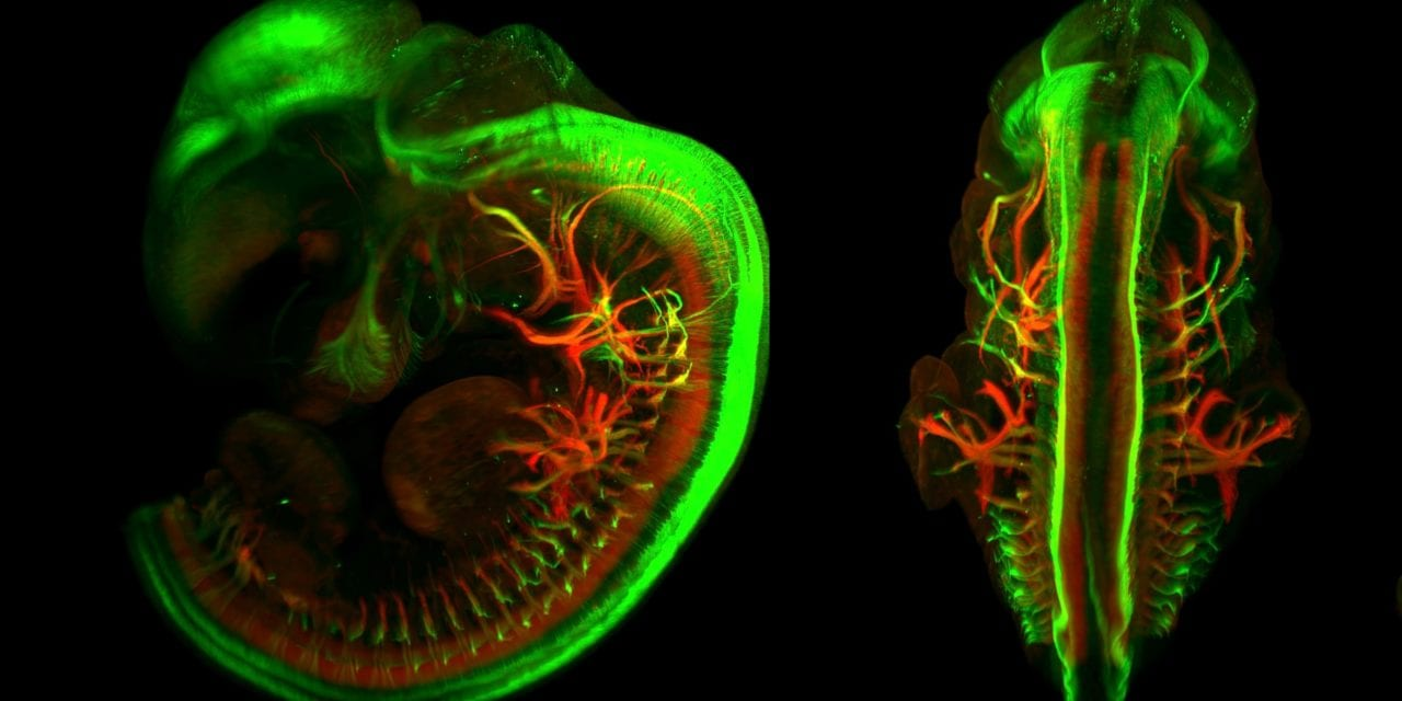 Miltenyi Biotec Acquires Promising Non-Harmful Imaging Process