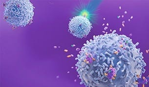 Releasable Antibodies for Label-Free Cells Expand Downstream Application Options