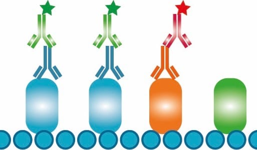 Bio-Rad Introduces Isotype-Specific Secondary Antibodies