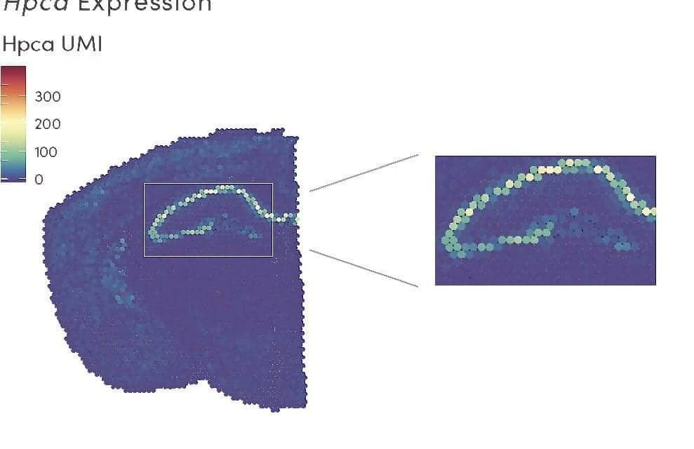 10x Genomics Introduces Visium Spatial Gene Expression Solution