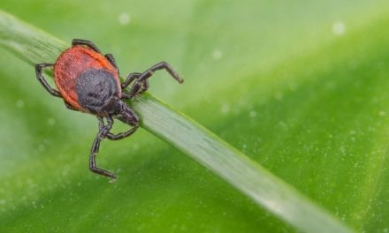Cost-Effective Tests for Lyme Disease and TBRF