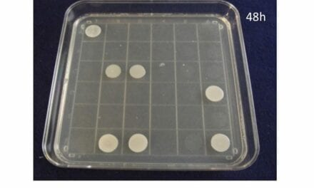 Santa Fe BioLabs Granted Patent for Identification System of Viable Candida auris