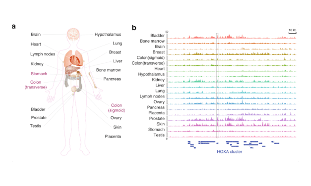 First Complete Whole Genome Map of Key Biomarker for Detecting Cancer, Other Diseases