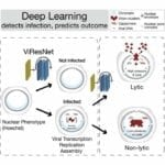 Viral Infections Predicted With Microscopy Deep Learning