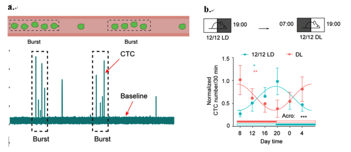 In Vivo Flow Cytometry May Be Next Step in Identifying CTCs