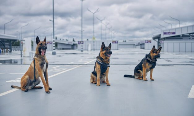 Miami Airport Pilots COVID-19 Detector Dog Program