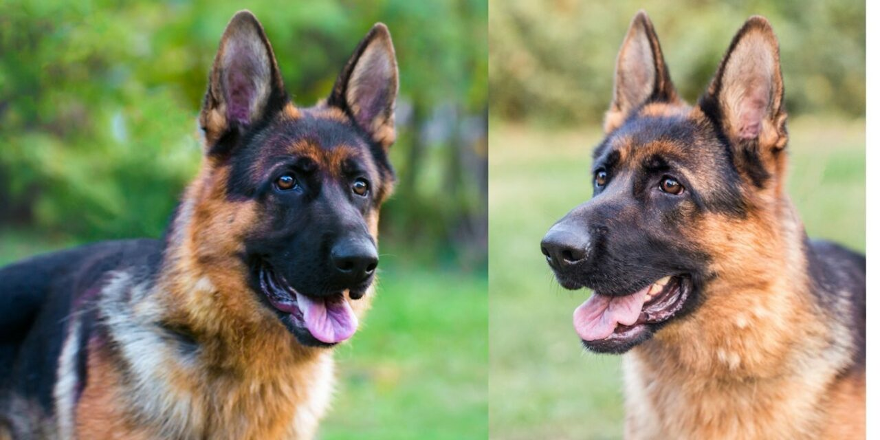 Canines Are Top Dogs vs. Technology in Detecting Prostate Cancer